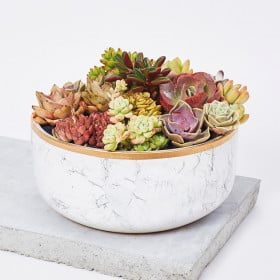 Luxurious Succulent Garden