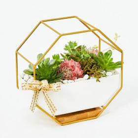 Succulents in Gold Rims